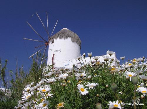 תמונה  2ממיקונוס