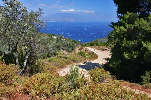 תמונה  2מסקיאתוס