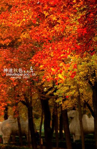 תמונה  3מנאנג'ינג