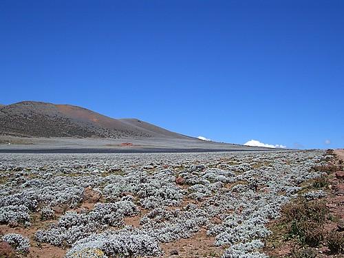 תמונה  2מפארק הלאומי בייל מאונטנס