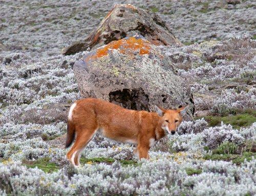 תמונה  1מפארק הלאומי בייל מאונטנס