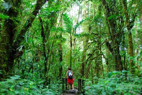 מידע למטייל בפארק הר הגעש בארו