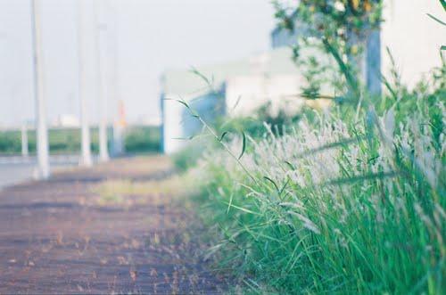 תמונה  3מבאט טראנג