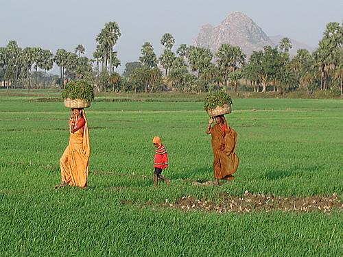 תמונה  2מבודגאיה