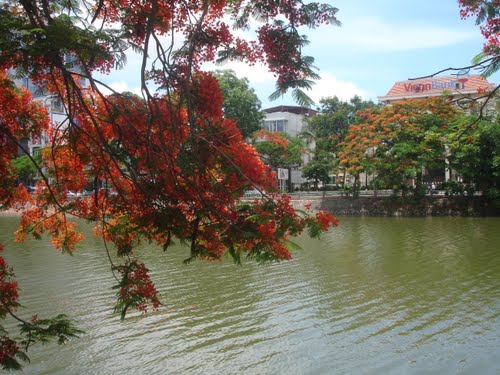 תמונה  2מהאי פונג
