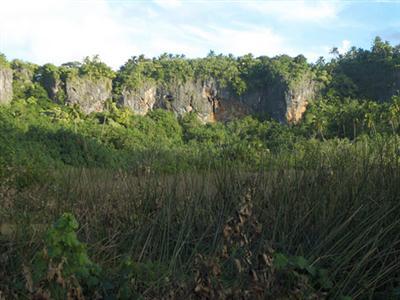 מנגאייה