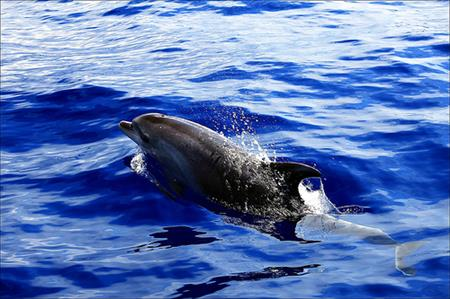 Whales & Dolphins Cruise