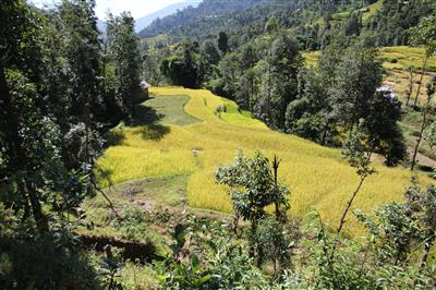 הפארק הלאומי לנגטנג