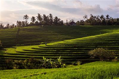 באלי אינדונזיה