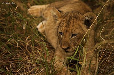 תמונה  0מפארק לאומי קרוגר