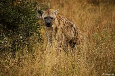 תמונה  1מפארק לאומי קרוגר