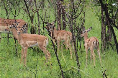 מידע למטייל בפארק לאומי קרוגר