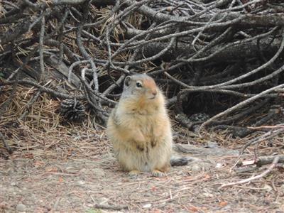 תמונה  2מפארק הלאומי הרי הרוקי