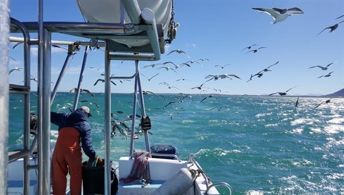 שייט לצלילה עם כרישים