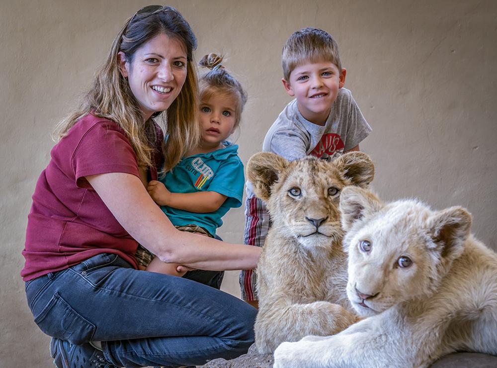 מלטפים גורי אריות בדרום אפריקה
