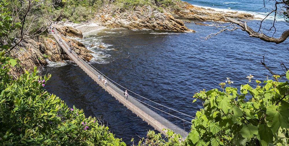 גשר תלוי בשמורת צ'יצ'יקמה בדרום אפריקה
